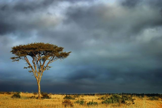 Beauty-of-Kenya-Land-5-640x426
