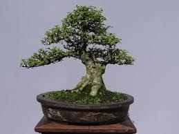 Résultats de recherche d'images pour «cây kiểng cổ truyền»
